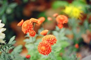 Lan Su: Orange by neuroplasticcreative