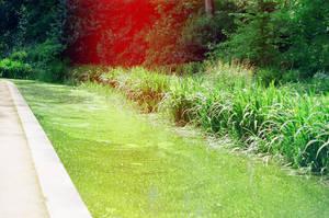 Prior Park Landscape Garden: Dip by neuroplasticcreative