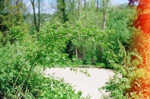Prior Park Landscape Garden: Seclude by neuroplasticcreative