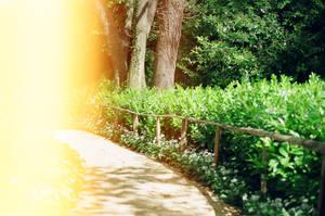 Prior Park Landscape Garden: Fade by neuroplasticcreative