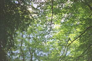 Prior Park Landscape Garden: Forest Dream by neuroplasticcreative