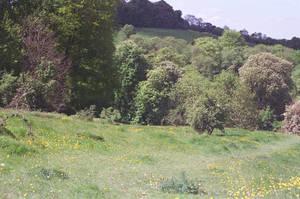 Prior Park Landscape Garden: Untravelled by neuroplasticcreative