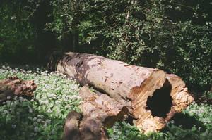Prior Park Landscape Garden: Fallen, I by neuroplasticcreative