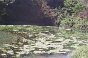 Prior Park Landscape Garden: Float, II by neuroplasticcreative