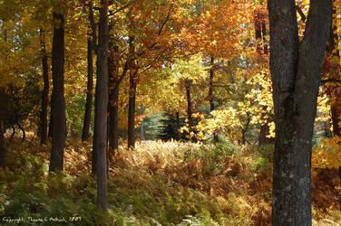 Golden Autumn by mottymotty