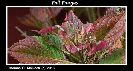 Fall Fungus 20131103 9 by mottymotty
