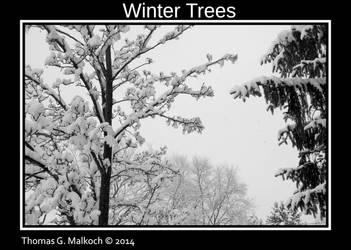 Winter Trees 20140203 9 by mottymotty