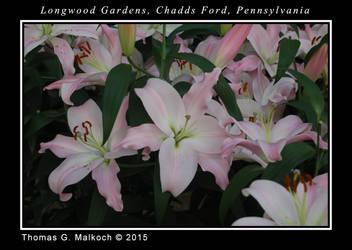 longwood feb 2015 DSC 0036 by mottymotty