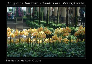longwood feb 2015 DSC 0056 by mottymotty