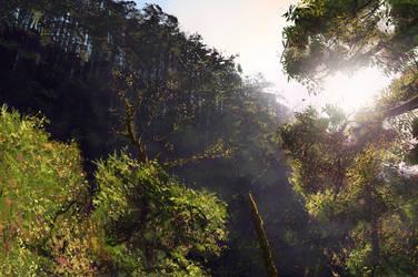 Tree Study, Oct-23-2015 by jewelsteel
