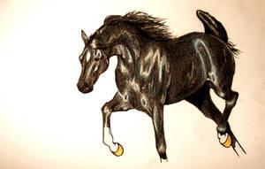Arab horse by kimi-o-ai