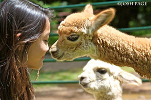 Girl with Baby Alpaca by JoshPage