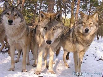 Three handsome guys watching by KekPafrany