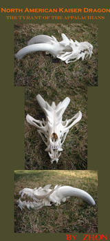 American Kaiser Dragon Skull by Zhon