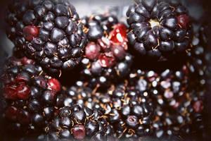 Blackberries by jspphotography