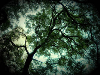 Tree clouds by Lazlo-Moholy