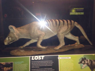 Thylacine by AnimalLover89
