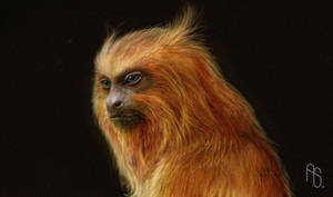 Golden Monkey by aaronsimscompany