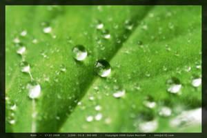 Rain by D-32