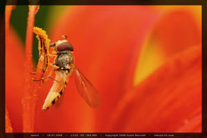 Wasp by D-32
