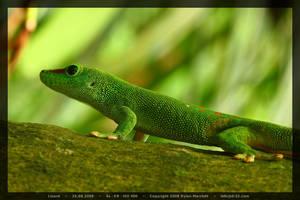 Lizard by D-32
