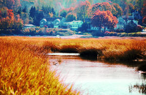 Nissequogue River by incolor16