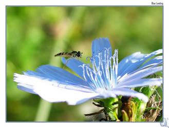 Blue landing by qwerty-dot-me