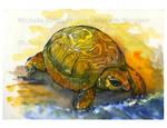 turtle illustration by michellescribbles