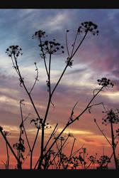 Evening by cloelia
