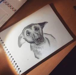 A doggo by christiee61