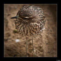 Pajaro by ufinderip