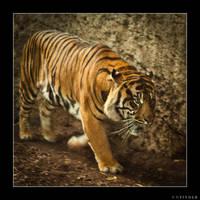 Tigre by ufinderip