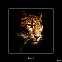 Leopard by ufinderip