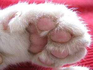 .:Cat Parts:. Seven, Paw Down by waterdrup