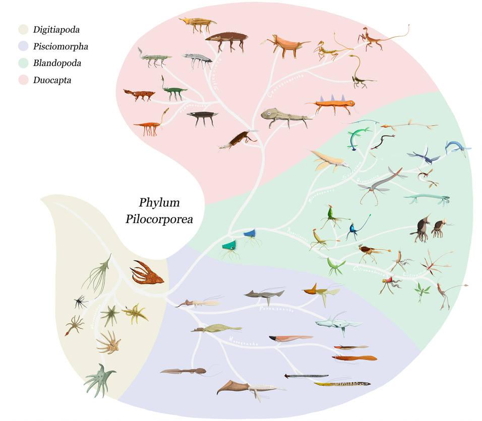 Phylum Pilocorporea by Sanrou