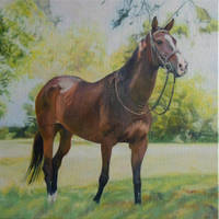 horse by anna36