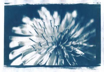 Dandelion blossom by HocEstCorpus