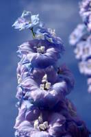 Garden: blue by AngelusDiem