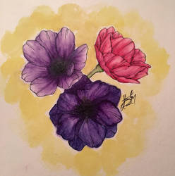 Watercolor Anemones  by cantalo-upes
