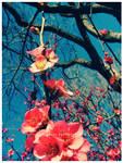 i miss spring by guava