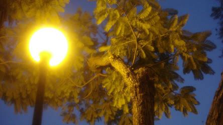 Night by Ixtlelic