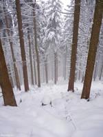 winter in the woods... by acoresjo88