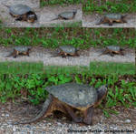 Dino turtle walking by dragonariaes