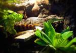 Little Dude by dragonariaes