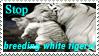 Against White Tiger Breeding by iamPURPLE