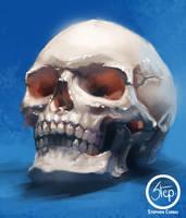 Skull studie by tranenlarm