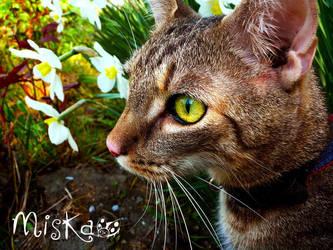 My cat by Akirys