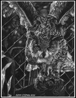 Let me Fly Away - Owl Portrait by DragonPress