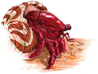 Hermit Crab by maumanga