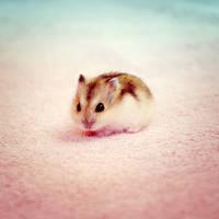 Baby hamster by Shiiranni